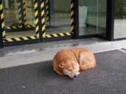 E rrallë/ Leo, qeni po pret të zotin të dalë nga spitali
