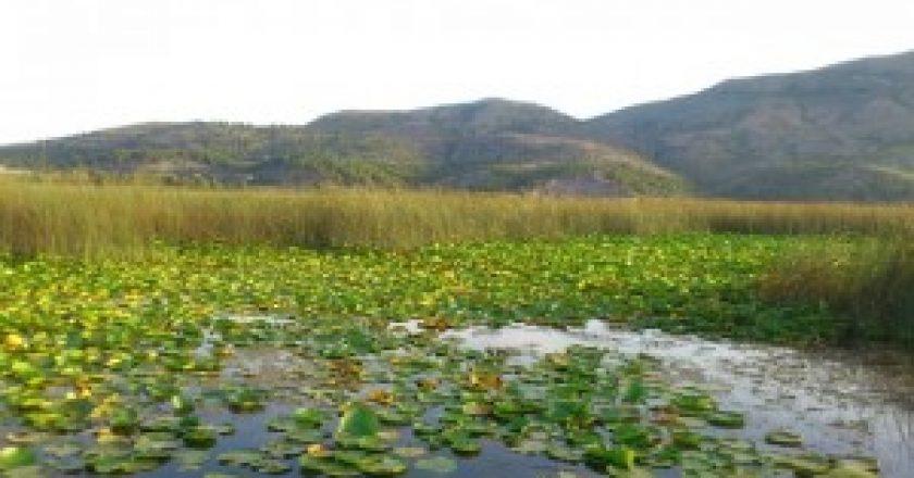 Lake-Skadar-2-300x168.jpg