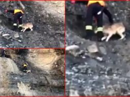 VIDEO/ E kërkoi një vajzë e vogël, zjarrfikësit shpëtojnë qenin nga gremina në Librazhd