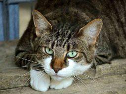 Vrau macen dhe e hodhi në plehra, arrestohet 80-vjeçari, dënohet me 30 mijë euro gjobë